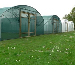 22ft Polytunnel