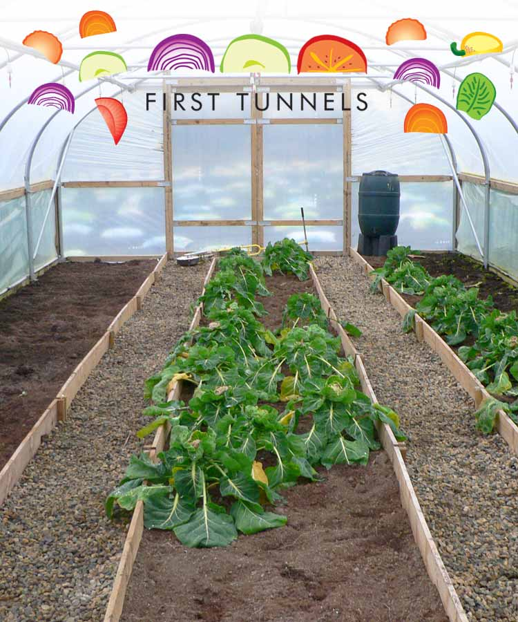 flowerbeds in a polytunnel