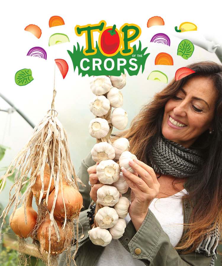 Top Of The Crops - Garlic Growing Guide | First Tunnels